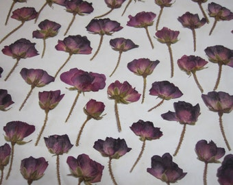 Dried Pressed Flowers for Crafting -  Natural Pinkish Wine Rose Buds