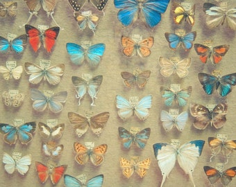 CLEARANCE SALE! Nature Photography, Butterfly Art, Insects, Wings, Rustic Wall Art, Electric Blue, Light Brown- The Butterfly Collection
