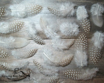 """Real Bird Feather Bulk Brown Guinea Feathers Eco Plumes Loose Feather Wholesale Real Feather Spotted Feather Assortment 50 @ 1.5 - 4.5"""" / B7"""