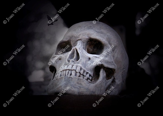Scary Spooky Halloween Goth Skull Skeleton With or Without Bat  Fine Art Photography Original Print