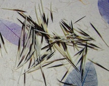 Porcupine Quills, Clean Quills, Unsorted Size Quills, Seconds, Mixed Size Quills, Jewelry Supplies, Quillwork, Earring Supplies
