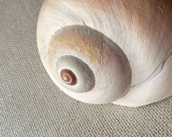 Seashell Art, Sea Shell Photography,Neutral Beach Art,Pastel Giclee Print,Coastal Wall Decor,Seashell Print,Tan Beach Decor,Coastal Wall Art