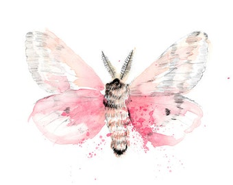 Pink Watercolour Moth Butterfly Art Print Watercolor Illustration Gilcee Art Print A4