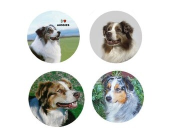 Australian Shepherd Magnets:  4 Charming Aussies  for your home, your collection,  or to give as a unique gift