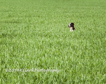 Field Pup Fine Art Photography Green Field Black and White Dog Minimal Style Home decor Spring pleasures Summer dreams Good Dog quirky home