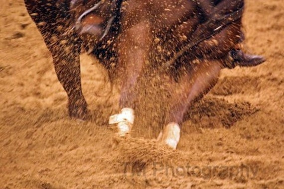 Cutting Horse Photography