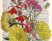Vintage Old Book Print - Colourful Floral Art Print - Upcycled Antique Book Print - Natural History Botanical Print