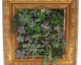 """14"""" Gold Framed Vertical Succulent Wall Garden - All Natural Living Art - Hanging Cedar Wood Planter"""