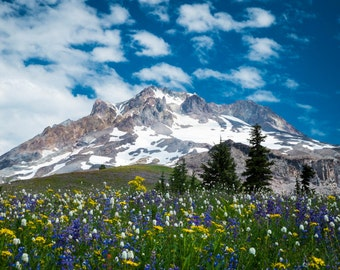 Mountain Photograph, Landscape Photo Wilderness Wildflowers Print Oregon Cascades Mt Hood Wall Art Flowers nat119