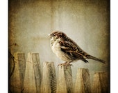 Even the sparrows are not forgotten, fine art bird photography, black birds , home decor, wall hanging, office decor
