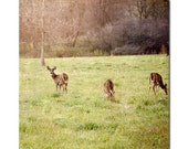 Startled, nature photography, deer, meadow , home decor, wall hanging, office decor
