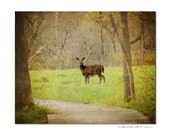 Doe a deer,  fine art  animal photography , nature decor, woodlands, hunter green