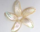 "5 Pearl Abalone Shells - 3"" - 3.5"" - Beach Decor"