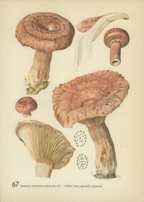 Vintage Mushroom Kitchen Decor