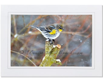 Bird Photography - Yellow-rumped Warbler in the Snow Photogreeting Card - Blank Inside - Snow Photography - Gifts for Bird Lovers - Bird Art
