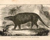 19thC megalosaurus dinosaur original antique animal anatomy print engraving
