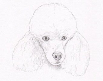 Poodle Signed Personalized Original Pencil Drawing Double Matted Print- Color Choice -Free Shipping- Desert Impressions