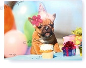 French Bulldog Birthday Card - Happy Birthday Red Fawn Frenchie with Mini Pearl Daisies 3-D