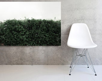 Large Canvas Landscape  Wild Hedge in the Rain