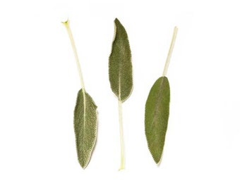 Sage Print, Food Photography, Green and White Kitchen Art Print, Still Life, Herb Photo, Sage, Food Print