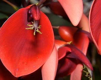 Fine Art Photo Kauai Hawaii