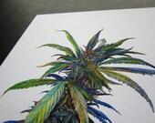 Cannabis Botanical print by Aiyana Udesen