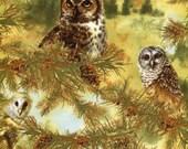 Owls of Wonder - SPX Fabric -  Fat Quarter