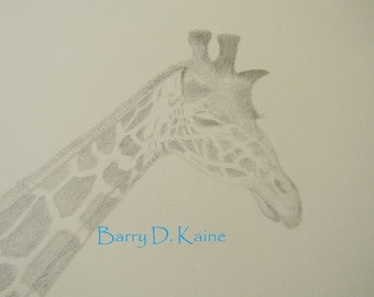 Giraffe portrait in Pencil print 2459