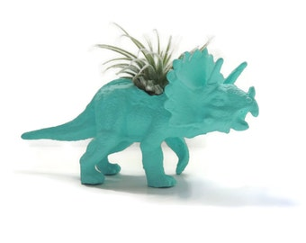 Travis the triceratops. Small turquoise dinosaur planter with air plant.