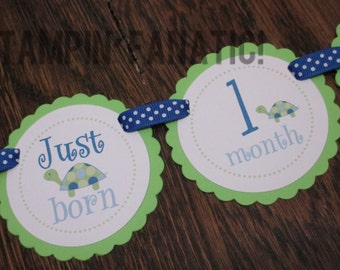 READY to SHIP Too Cute Turtles Collection Just Born/0-12 mos 12 Month First Birthday Photo Banner. Picture Banner. Turtle. Under the Sea.