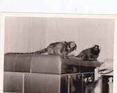 Vintage Photo - Three Monkeys, Vernacular, Ephemera (ZZZ)