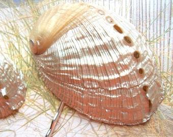 PEARLY SHELL BOBBY Pin - mermaid hair, beach girl, tropical nautical, beach hair accessories, anniversary gift, beach wedding, beachy
