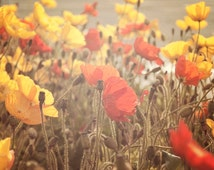 """Boho Wall Art, Rustic Floral Photography, Poppy Flowers, Red Yellow Brown Beige , Soft Sunlight, """"Fading Beauty"""""""