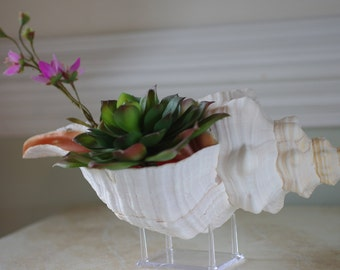 Acrylic Stand -Letter Stand or Seashell Stand