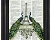 BOGO SALE PEACOCK Art Print French Paris Upcycled Art Print Vintage Dictionary Wall Art Print Peacock Print