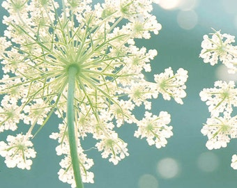 """Flower photography/ Teal blue wall art / Nature photography / Queen Annes Lace / Botanical Art, /Turquoise """"Summer Meadow"""""""