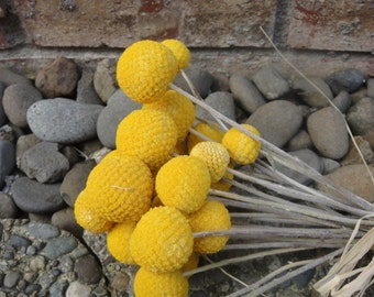 Yellow Billy Balls   Dried Billy Balls   Craspedia    Yellow Billy Buttons     Wedding Florals  Floral Arrangement  Dried Flowers