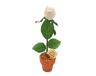 "14th Anniversary gift - ""ivory"" rose"