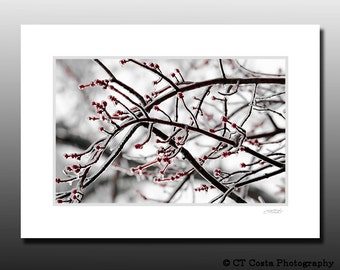 Nature Winter Scene, Matted Photography Print, Frozen Ice Tree, Red and White, Fits 5x7 inch frame