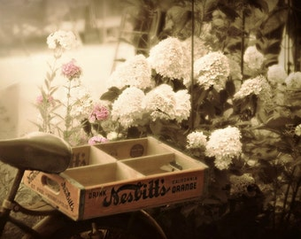 Floral Photography Antique bicycle,vintage photo,bike basket filled with flowers,baby nursery art work,hydrangeas,gold,copper,pink,mauve,