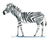 Zeb Zebra - Animal Art Print