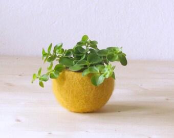 Succulent planter / felted pod / Air plant pot / mustard yellow desk organizer