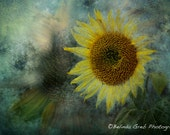 "Nature Photography - ""Sunflower Sea"" - sunflower, impressionistic, abstract, unframed print"