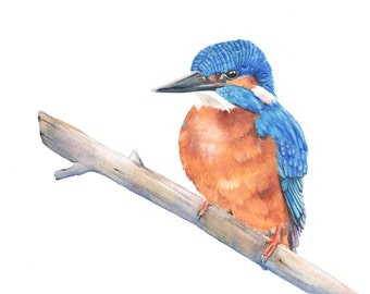 KIngfisher painting N0 3 bird watercolor painting -  Print of watercolor painting - A4 print, bird art, wall art, home decor