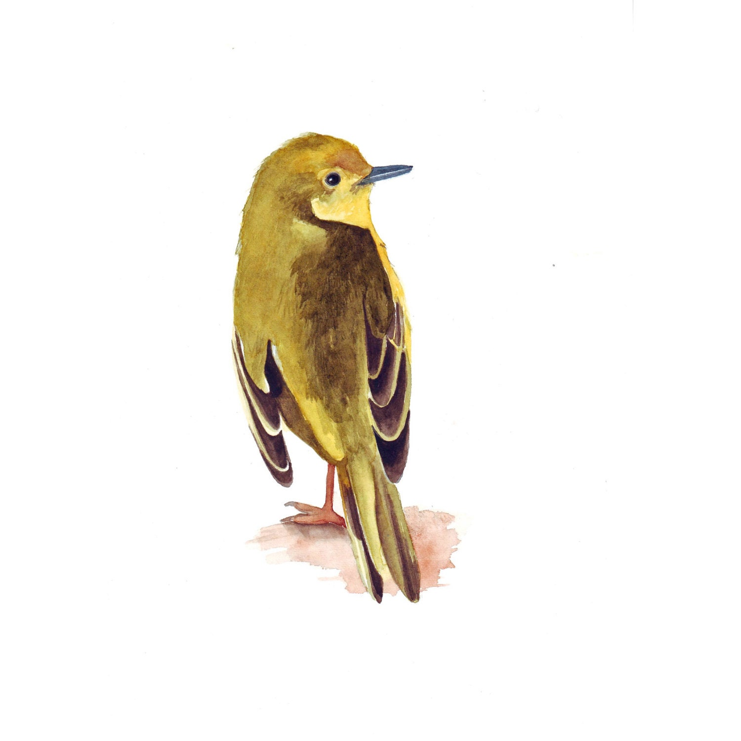 Bird Painting Yellow Warbler Y065 PRINT of by LouiseDeMasi