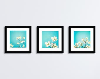 Aqua Blue Photo Set, Three Photographs flower photography dogwood floral teal decor nursery spring art print white yellow nature photography