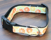 "1"" Dog Collar or Martingale - Summer Citrus"