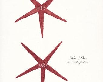 Two Coastal Decor Antique Sea Stars Giclee Art Print  8x10 sunset red