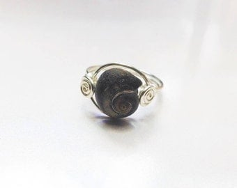 One of A Kind Moon Snail Ring - Black Spiral Ring - Size 6 - Charleston Silver Shell Ring