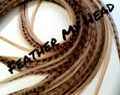 """Long 9""""-12""""  Feather Hair Extension, Whiting Eurohackle, Fawn Color (5 Grizzly / 5 Solid)"""